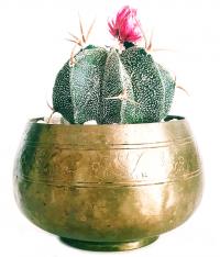 web-design-and-development-cactus-4